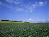 Potato and Wheat Fields Near Furano, Hokkaido Island, Japan, Asia Photographic Print by Gavin Hellier