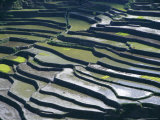 Flooded Rice Terraces, 2000 Years Old, Banaue, Island of Luzon, Philippines, Southeast Asia, Asia Photographic Print by Maurice Joseph