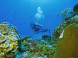 Underwater Diver and Corals, Cozumel Island, Mexico Photographic Print by Gavin Hellier