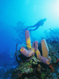 Coral Formations and Underwater Diver, Cozumel Island, Caribbean Sea, Mexico Photographic Print by Gavin Hellier