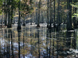 Cypress Swamp, Cypress Gardens, North Charleston, South Carolina, USA Photographic Print by James Green