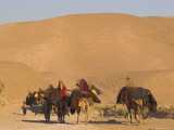 Kuchie Nomad Camel Train, Between Chakhcharan and Jam, Afghanistan, Asia Photographic Print by Jane Sweeney