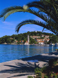 Promenade and Harbour, Cavtat, Croatia, Europe Photographic Print by Nelly Boyd