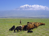 Herd of Goats and Goatherder in the Plains Beneath Mount Ararat, Turkey, Europe Photographic Print by Charles Bowman
