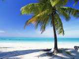 Palm Tree, White Sandy Beach and Indian Ocean, Jambiani, Island of Zanzibar, Tanzania, East Africa Photographic Print by Lee Frost