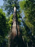Primary Lowland Rainforest, Lambir Hills National Park, Sarawak, Island of Borneo, Malaysia, Asia Photographic Print by Jane Sweeney