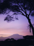 Sunrise, Mount Kilimanjaro, Amboseli National Park, Kenya, East Africa, Africa Photographic Print by David Poole