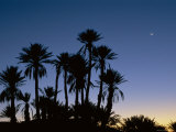 Palm Trees in Silhouette at Dawn, on Edge of Sahara Desert Near Morocco, North Africa Photographic Print by Lee Frost