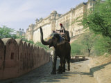 Elephant at the Amber Palace, Jaipur, Rajasthan State, India, Asia Photographic Print by Jane Sweeney