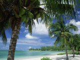 Palms on Shore, Cayman Kai Near Rum Point, Grand Cayman, Cayman Islands, West Indies Fotografisk tryk af Ruth Tomlinson