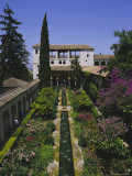 Gardens of the Generalife, the Alhambra, Granada, Andalucia (Andalusia), Spain, Europe Photographic Print by Julia Thorne