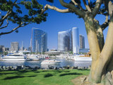 Embarcadero Marina, San Diego, California, USA Photographic Print by Ruth Tomlinson