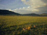 Lionesses in the Masai Mara National Reserve in the Evening, Kenya, East Africa, Africa Photographic Print by Julia Bayne