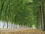 Avenue of Poplar Trees, Parc De Marly, Western Outskirts of Paris, France, Europe Photographic Print by Duncan Maxwell
