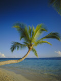Palm Tree Overhanging the Beach and Sea, the Maldives, Indian Ocean Photographic Print by Adina Tovy