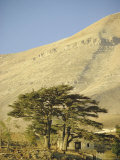 Cedars of Lebanon at the Foot of Mount Djebel Makhmal Near Bsharre, Lebanon, Middle East Photographic Print by Ursula Gahwiler