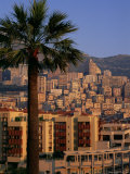 High Rise Buildings at Sunrise, Palm Tree in Foreground, La Condamine, Monaco, Europe Photographic Print by Ruth Tomlinson