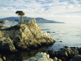 The Lone Cypress Tree on the Coast, Carmel, California, USA Photographic Print by Michael Howell
