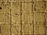 Mayan Carvings on Stela, Tikal, Guatemala, Central America Reproduction photographique par Upperhall Ltd