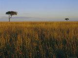 Masai Mara National Reserve, Kenya, East Africa, Africa Fotografie-Druck von I Vanderharst