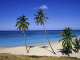 Palm Trees on Beach, Antigua, Caribbean, West Indies, Central America Photographic Print by Firecrest Pictures