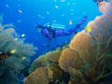 Underwater Diver Swimming Above Reef, with Orange Sea Fan, Similan Island, Thailand, Asia Photographic Print by Louise Murray