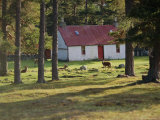 House and Deer Among Trees, the Grampians, Scotland, UK, Europe Fotografie-Druck von I Vanderharst