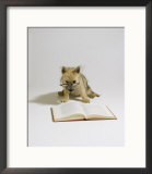 Cairn Terrier, 4 Months Old Framed Photographic Print by David M. Dennis