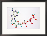 Adenosine Triphosphate Framed Photographic Print by David M. Dennis