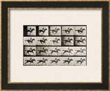 "Jockey on a Galloping Horse, Plate 627 from ""Animal Locomotion,"" 1887 Framed Giclee Print by Eadweard Muybridge"