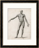 View of the Muscles in the Human Body Framed Giclee Print