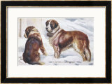 Two St. Bernard Rescue Dogs in the Alpine Snow Framed Giclee Print