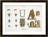 "Bees and Bee-Keeping, from ""The Young Landsman,"" Published Vienna, 1845 Framed Giclee Print by Matthias Trentsensky"
