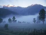 Farm in Mist Below Fox Glacier, Westland, West Coast, South Island, New Zealand, Pacific Photographic Print by D H Webster