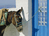 Donkey, Thira, Santorini, Cyclades Islands, Greece, Europe Photographic Print by Michael Short