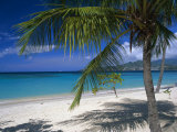 Palm Tee and Beach, Grand Anse Beach, Grenada, Windward Islands, Caribbean, West Indies Photographic Print by John Miller