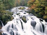 Swallow Falls, Betws-Y-Coed, Gwynedd, Wales Photographic Print by Nigel Francis