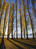 Autumnal Trees by Lake Wanaka, Otago, South Island, New Zealand Photographic Print by Dominic Webster