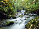 Stock Ghyll Beck, Ambleside, Lake District, Cumbria, England Fotoprint van Kathy Collins