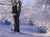 Winter Scene Beside the River Tay, Aberfeldy, Perthshire, Scotaland, UK Photographic Print by Kathy Collins