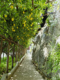 Lemon Groves, Amalfi Coast, Campania, Italy, Europe Photographic Print by Mark Mawson