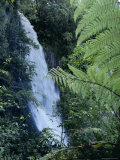 Waiere Falls Near Te Wairoa, North Island, New Zealand, Pacific Photographic Print by Ian Griffiths