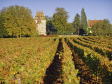 Vineyards, Aloxe Corton, Cote d'Or, Burgundy, France, Europe Photographic Print by John Miller