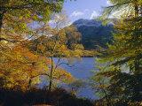 Autumn Trees at Ullswater, Lake District National Park, Cumbria, England, UK, Europe Fotografisk tryk af Roy Rainford
