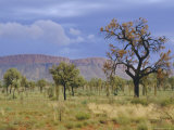 Landscape Around Papunya, Northern Territory, Australia Photographic Print by Claire Leimbach