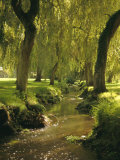 Willow Trees by Forest Stream, New Forest, Hampshire, England, UK, Europe Photographic Print by Dominic Webster
