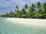Palms, White Sand and Turquoise Water, One Foot Island, Aitutaki, Cook Islands, South Pacific Photographic Print by Dominic Webster