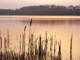 Frensham Great Pond at Sunset with Reeds in Foreground, Frensham, Surrey, England Photographic Print by Pearl Bucknell