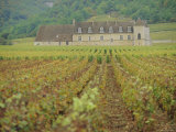 Chateau Vougeot, Cote d'Or, Burgundy, France, Europe Photographic Print by John Miller