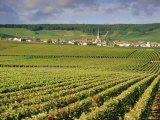 Chamery, Montagne De Reims, Champagne, France, Europe Photographic Print by John Miller